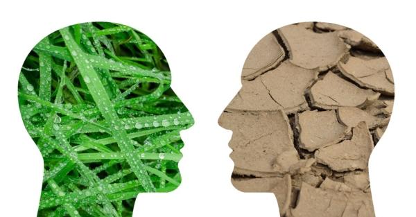 climate change, martha cohen, aging, critical gerontology,